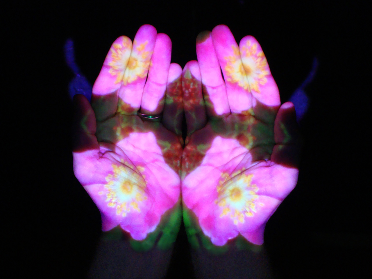 Mudra Flower Shower: California Wild Rose (catalyzing love for human life and the Earth), Suran Song 2014