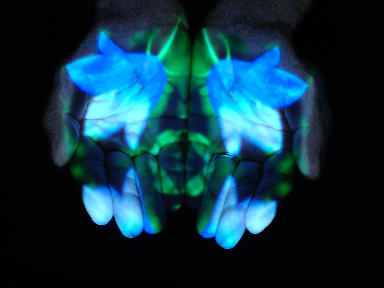 Mudra Flower Shower: Harebell (freedom from fear to sense the entire universe as home), Suran Song 2014